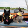 Top 8 tips and tricks when taking your pet onboard Thumbshot